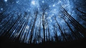 cielo-estrellado-en-el-bosque-1024x576