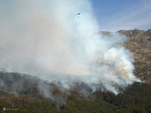 Amanece otra vez incendiada la Sierra de Gredos