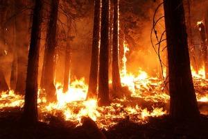 wildfire-1105209_960_720