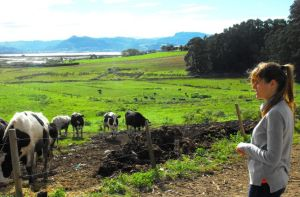 explotacion-vacuno-Cantabria-LUCIA-LOPEZ_EDIIMA20151125_0829_21