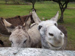 l_175520_burros-en-alentejo-atarturo-crosby